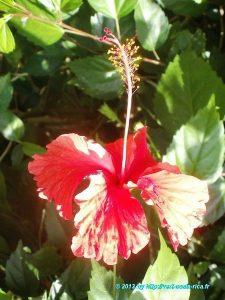 Flore du Costa Rica dans le village de Cahuita
