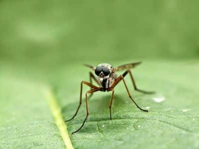 Le Dengue au Costa Rica - information et conseils de santé à suivre !