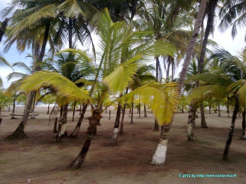 Costa Rica en destination de Bocas del toro