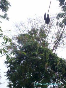 Image d'un paresseux sur le sentier du parc national de Manuel Antonio