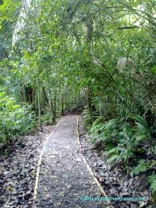Image de la Nature sur le sentier du parc national de Manuel Antonio