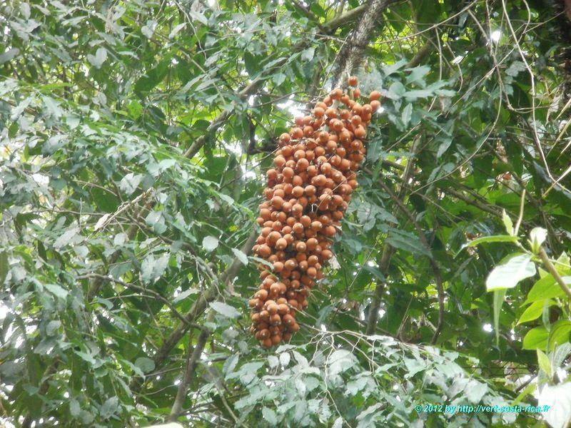 La Faune dans le Parc national de Manuel Antonio - Nature du Costa Rica