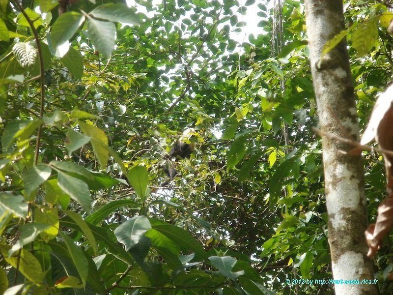 Le Parc national de Manuel Antonio - Nature et animaux du Costa Rica