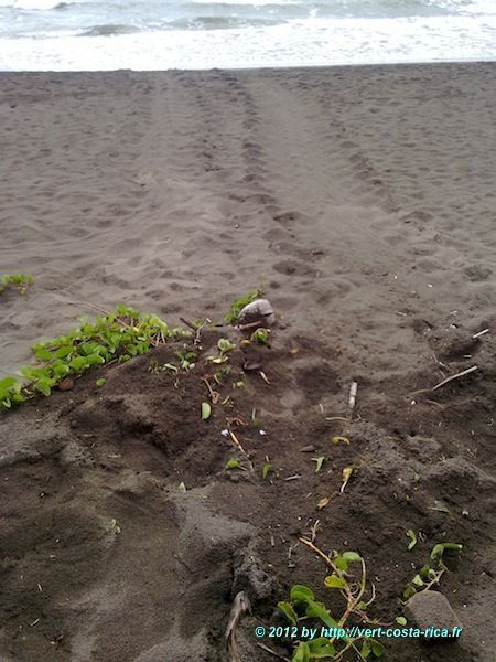 Plage, Tortues et village de Tortuguero au Costa Rica