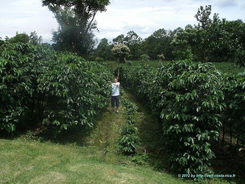 Images du tour de Café au Costa Rica - Vallée Centrale