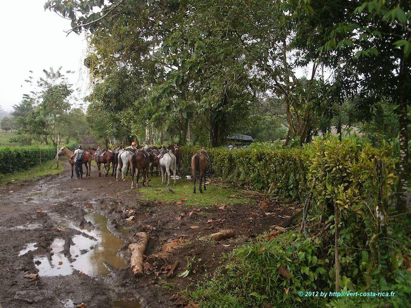 Arenal : Randonnée à cheval vers la Catarata de La Fortuna