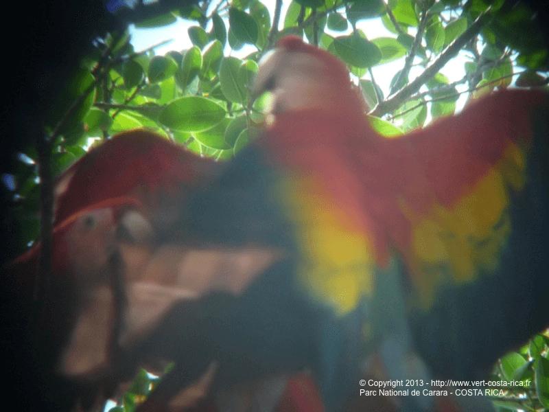 Parc National Carara au Costa Rica - obervation des oiseaux