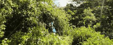 Monteverde à la Cascade San Luis - Catarata San Luis