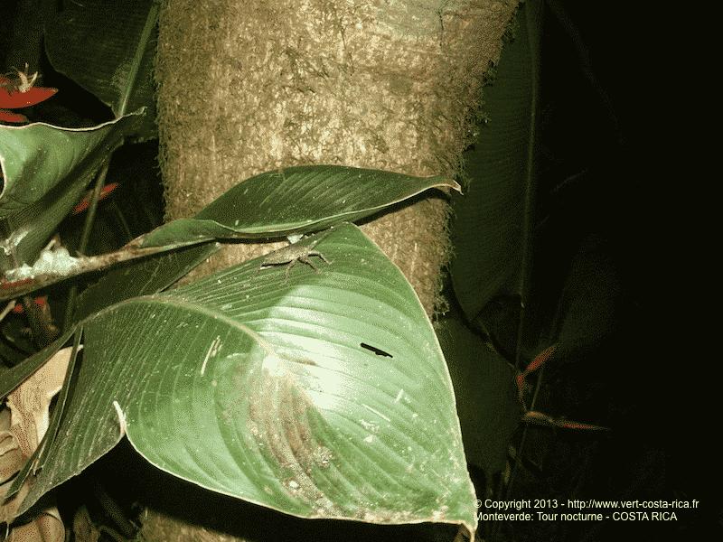 Tour de nuit à Monteverde : à la rencontre des animaux nocturnes !