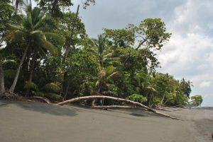 Découvrez la Vallée d'Osa : expérience de voyage au Costa Rica