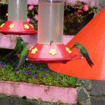 Le Jardin des Colibris de Monteverde