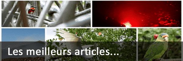 Best-of des articles Vert Costa Rica
