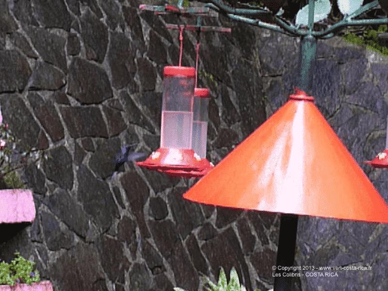 Jardin des Colibris de Monteverde, CostaRica