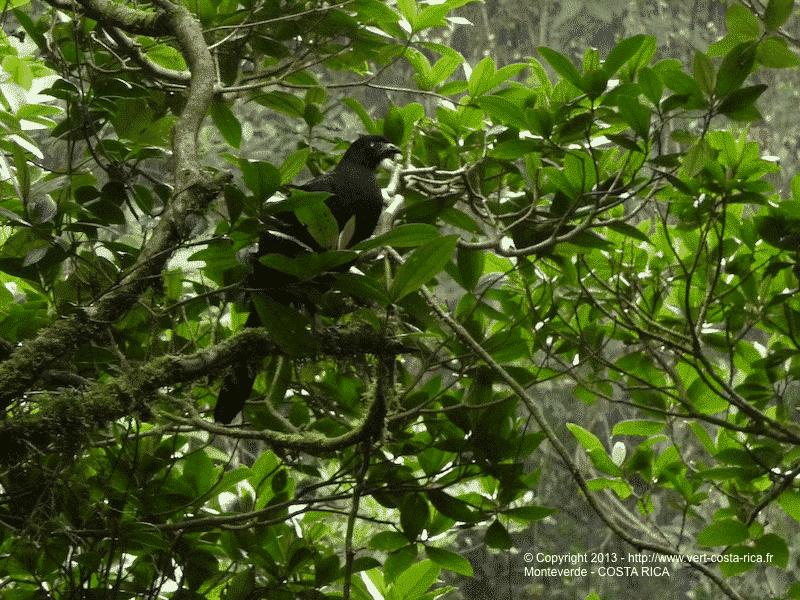 Images des Ponts suspendus de Monteverde