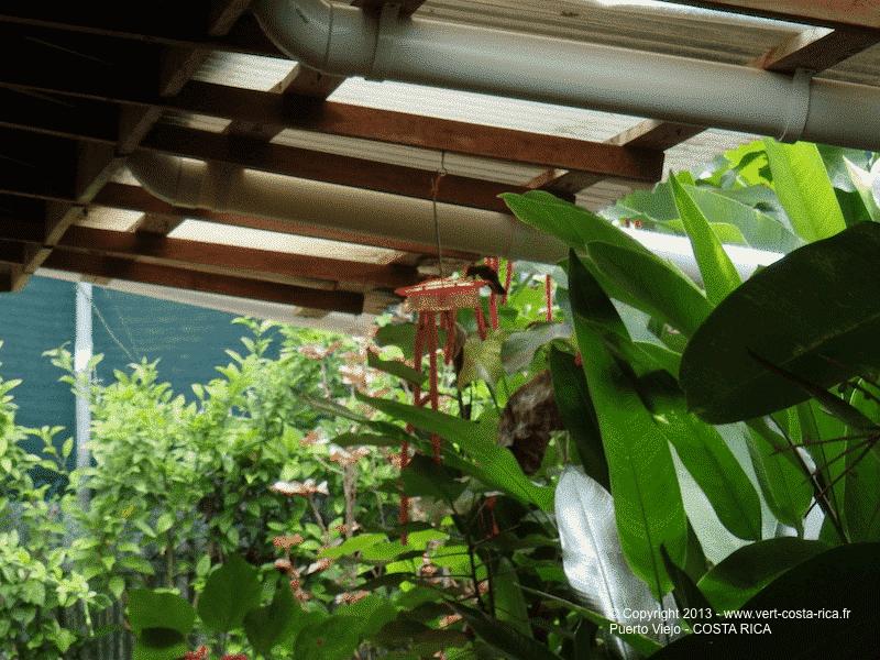 Colibris - Puerto Viejo de Talamanca - Costa Rica