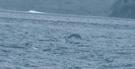 Observation des dauphins sur les cotes Pacifique, Isla del Coco