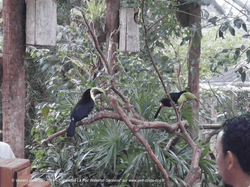 Parc animalier à la Paz Waterfall Gardens