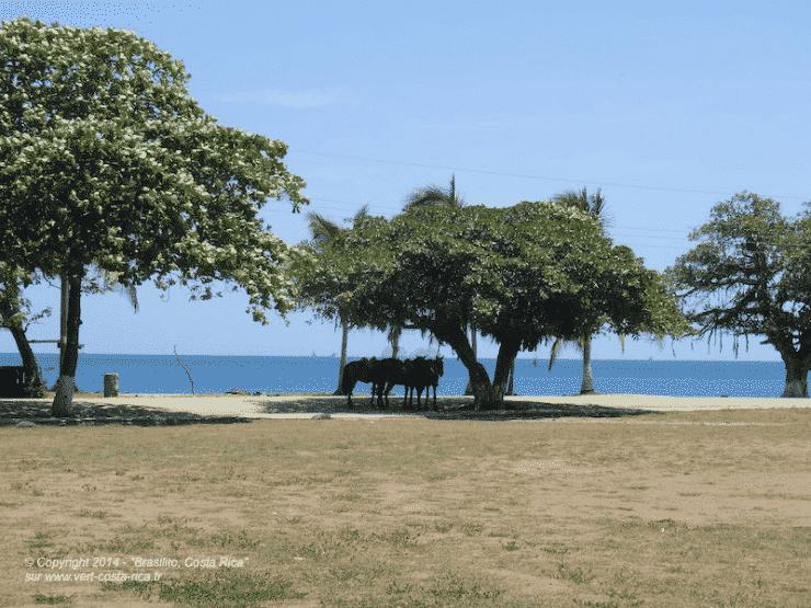 Brasilito, village de pêcheurs dans le Guanacaste, Costa Rica