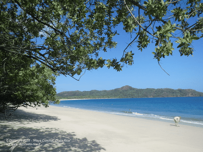 Playa Chonchal, Plage de conchal à 2 km de Brasilito - Costa Rica