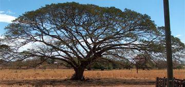 Région du Costa Rica : Guanacaste