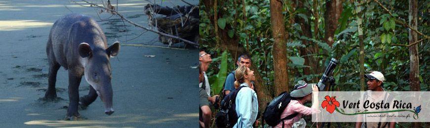 Pacifique Sud | Voyage au Costa Rica
