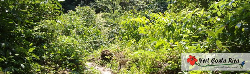 Plaines du Nord | Voyage au Costa Rica