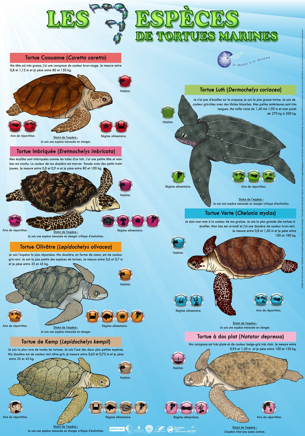7 Especes De Tortues Marines