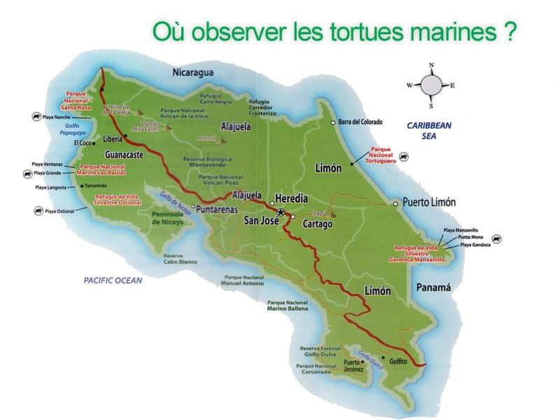 Où observer les tortues marines au Costa Rica ?