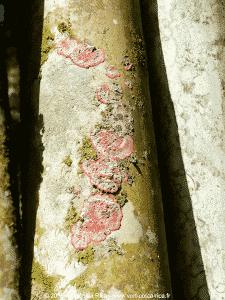 Jardin Botanique Lankester pour découvrir les orchidées