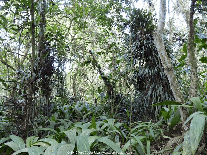 Jardin botanique lankester pour d couvrir les orchid es for Papillon jardin botanique 2015