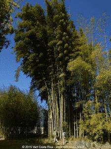 Jardin Botanique Lankester