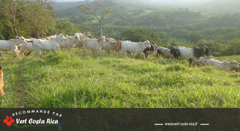 Cabañas Cañas Castilla : Découvrez la vie à la campagne, à Cañas