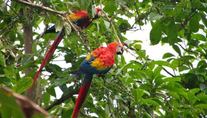 Carara : les parcs nationaux du Costa Rica