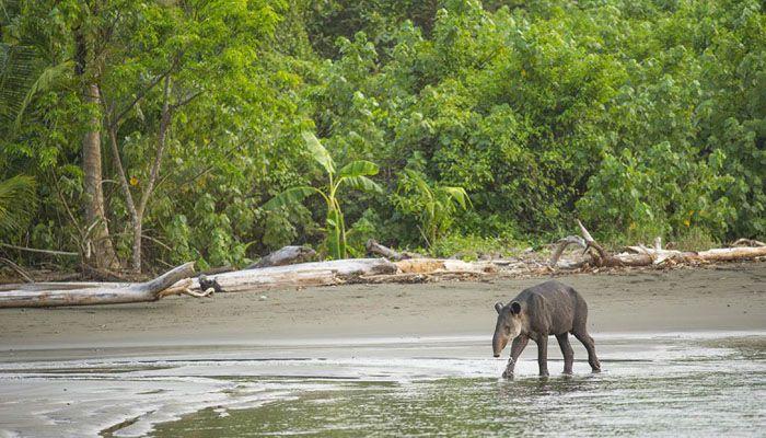 Corcovado : les parcs nationaux du Costa Rica