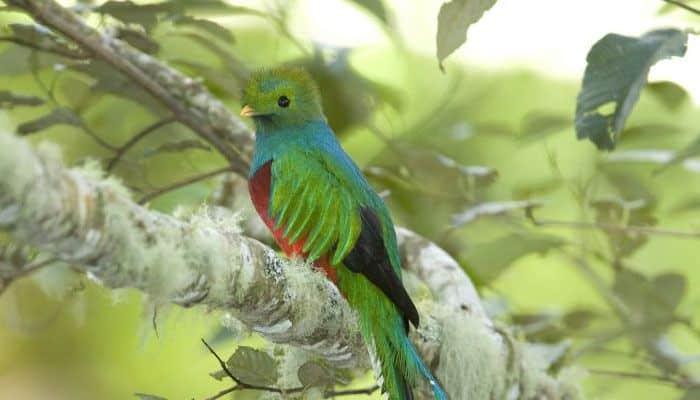 Los Quetzales : les parcs nationaux du Costa Rica