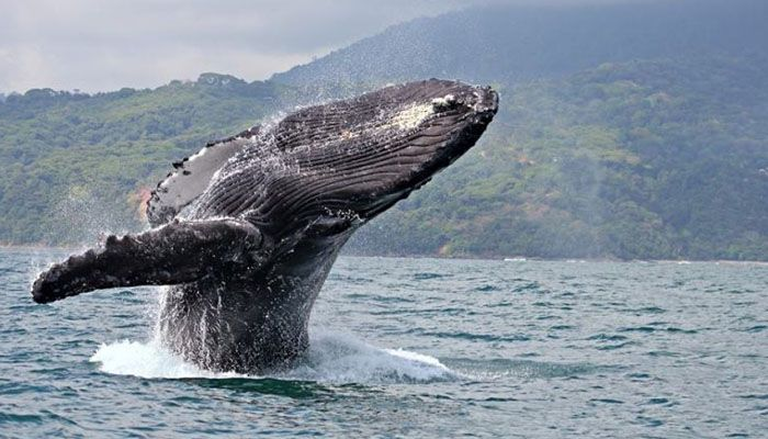 Marino Ballena : les parcs nationaux du Costa Rica