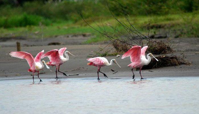 Palo Verde : les parcs nationaux du Costa Rica
