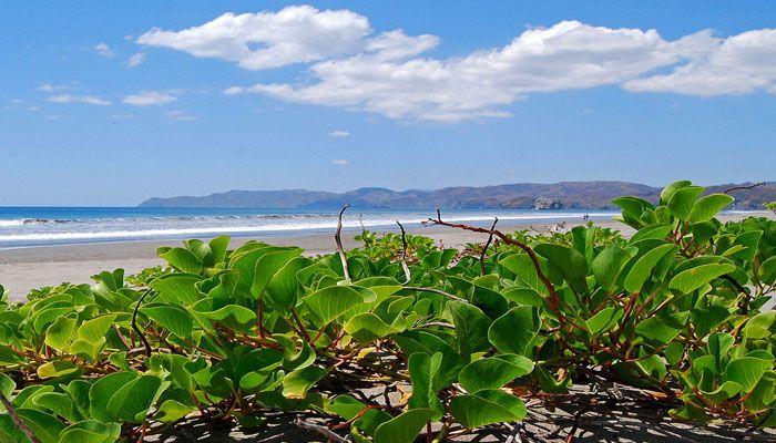Santa Rosa : les parcs nationaux du Costa Rica