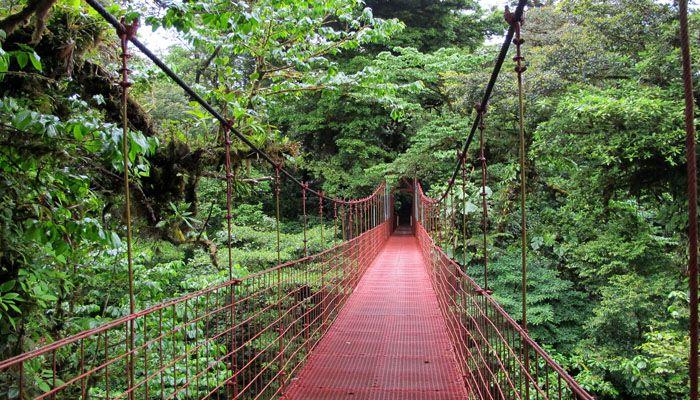 Réserves nuageuses de Monteverde : réserves et refuges biologiques du Costa Rica