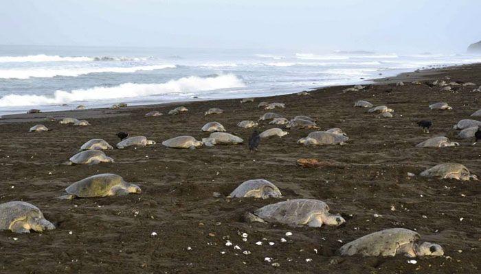 Cahuita : réserves et refuges biologiques du Costa Rica