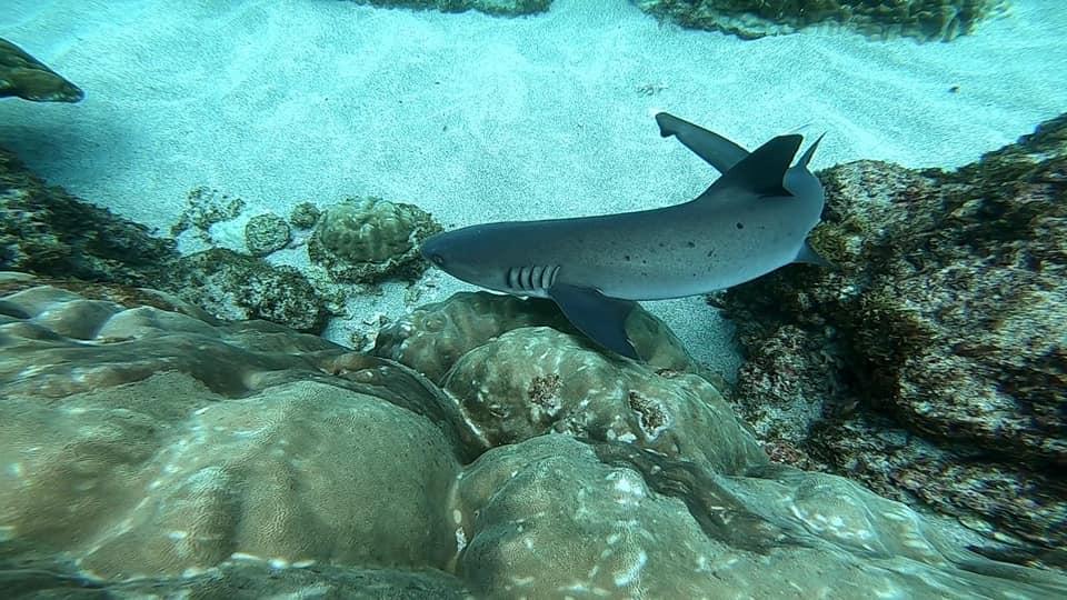 requin Pack-Corcovado-Service-vertcostarica
