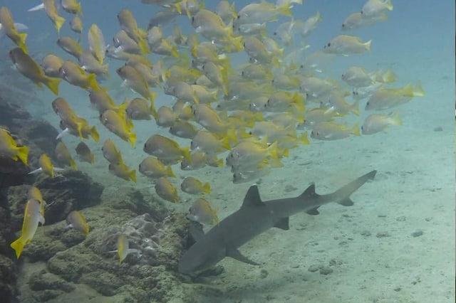 poissons Pack-corcovado-service-vertcostarica