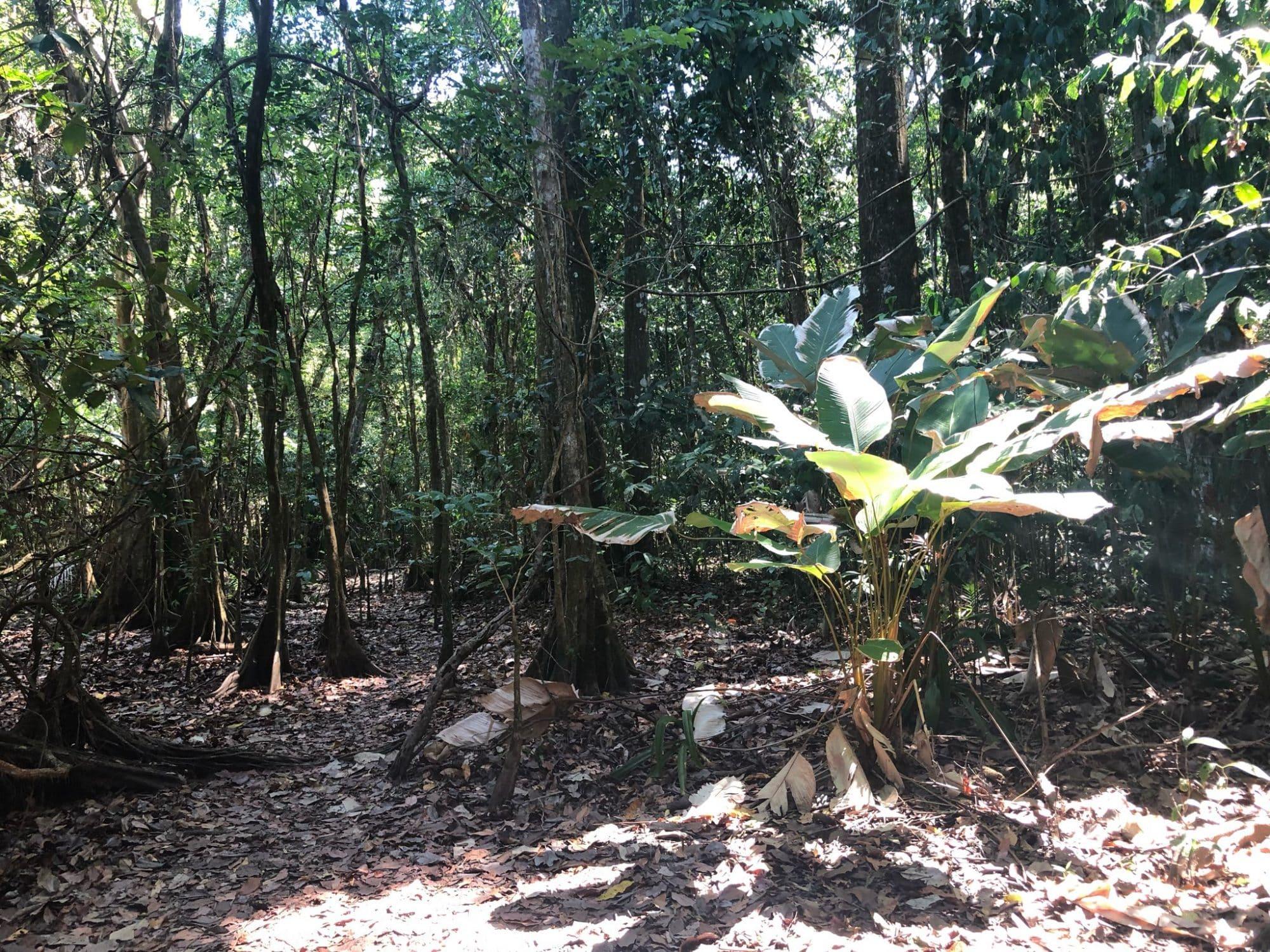 Foret parc Corcovado - vert costa rica