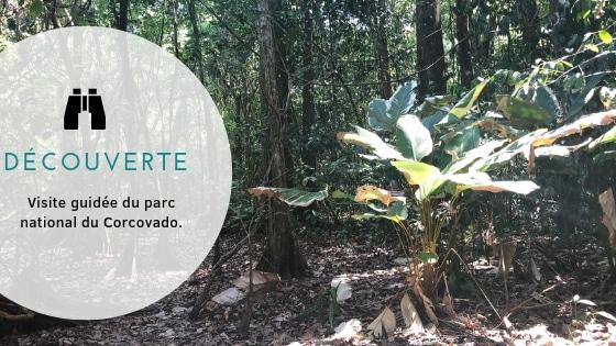 Excursion au Corcovado pour une découverte de la faune et de la flore !