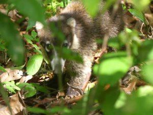 e joyau vert du Costa Rica: le parc National du Corcovado