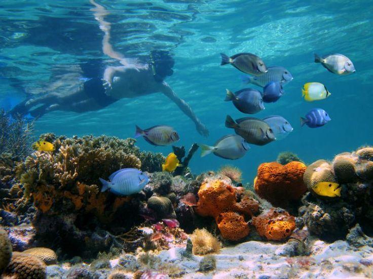 Vivez une journée d'aventure à Cayo Coral et Zapatilla Island