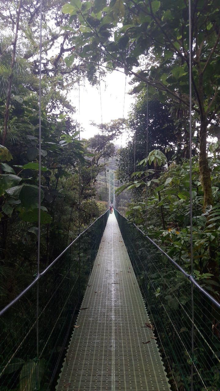 monterverde_03-vert-costa-rica