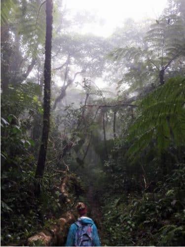 Découverte de Monteverde : forêt des nuages et réserve de Santa Elena