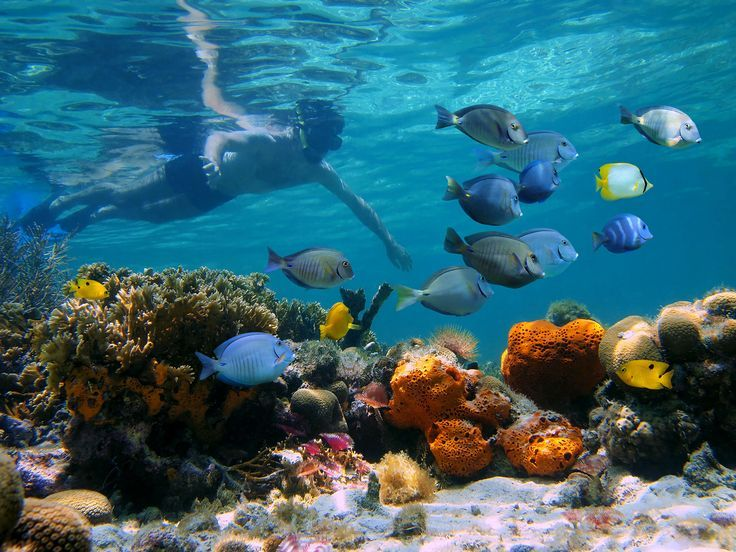 snorkeling-isla-del-cano-vertcostarica