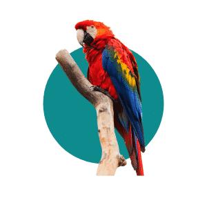 Faune du Costa Rica - Animaux - Aras Rouge
